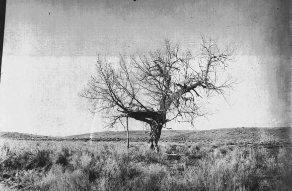 Tree burial