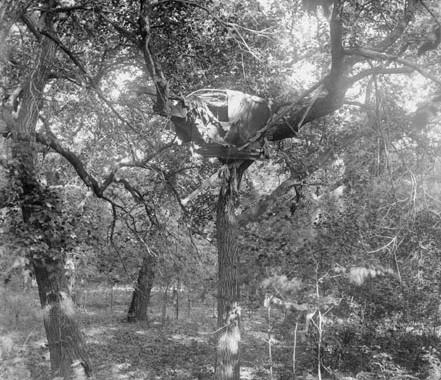 tree_burial_04
