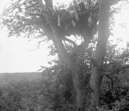 tree_burial_05